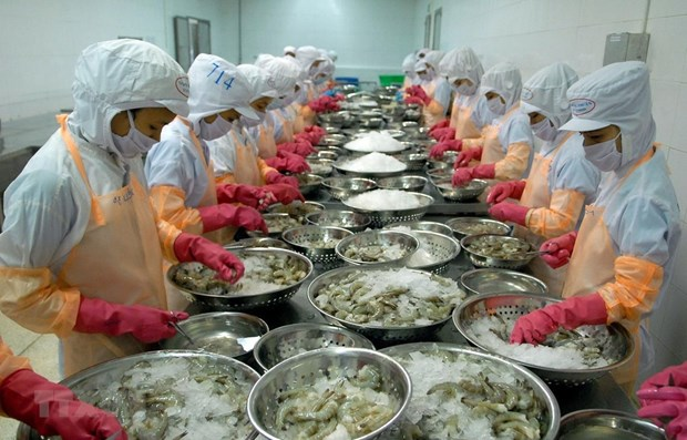 Ca Mau province works to ease pandemic's impact on shrimp export hinh anh 1