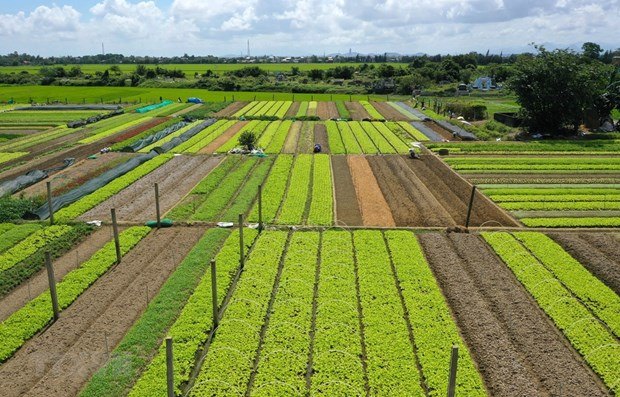 QI agriculture posts nearly 49 percent growth in trade surplus hinh anh 1