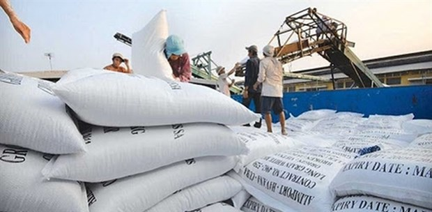 Ministry of Industry and Trade proposes resuming rice exports hinh anh 1