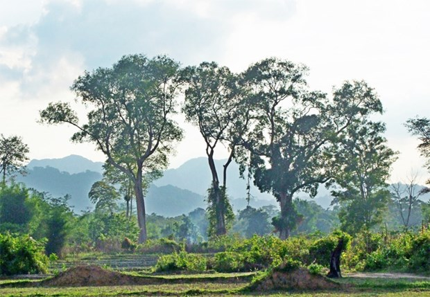 Vietnam helps Laos prepare for UNESCO recognition of national reserve hinh anh 1
