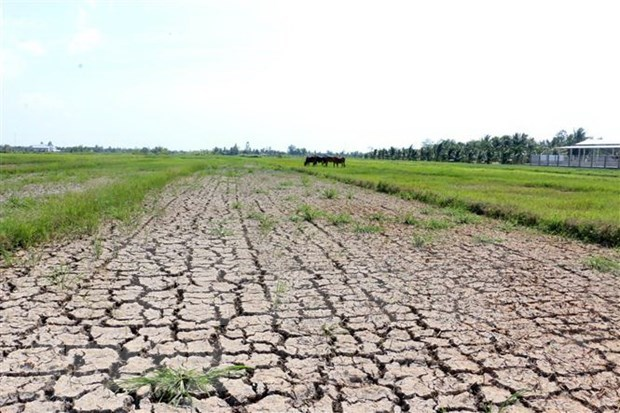 Saline intrusion in Mekong Delta likely to linger on hinh anh 1