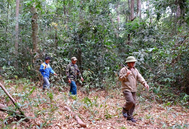 Binh Phuoc tightens forest protection in dry season hinh anh 1