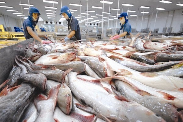 Tra fish exports to US, China rise in March hinh anh 1
