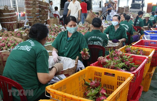 Tien Giang's fruit export turnover up 20.3 percent in Q1 hinh anh 1