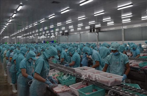 Dong Thap helps fish exporters amid lower demand during COVID-19 hinh anh 1