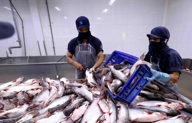 Aquatic exports to China shows sign of recovery hinh anh 1