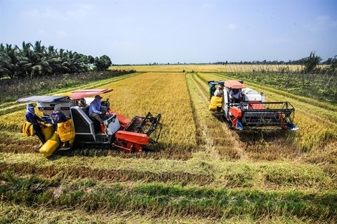 Agricultural land tax exemption policy proposed to be extended hinh anh 1