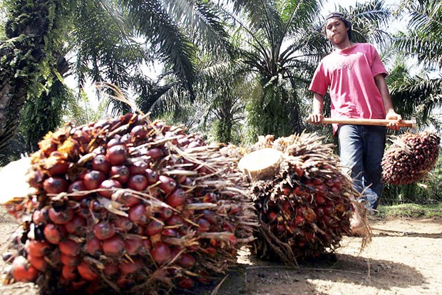 Indonesia's palm oil exports fall due to pandemic hinh anh 1