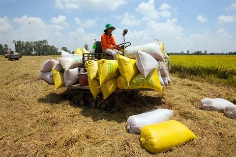 Localities, exporters propose lifting rice export limits hinh anh 1