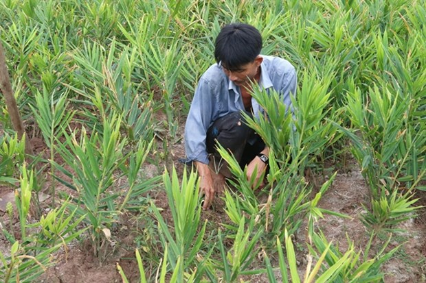 Specialised farming areas developed for climate change adaptation hinh anh 1