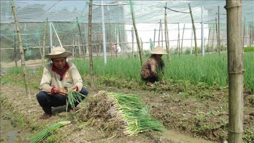 Tra Vinh province uses loans to lift its Khmer populace out of poverty hinh anh 1