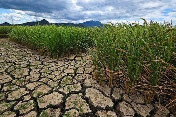 Binh Thuan declares Level 2 drought emergency hinh anh 1