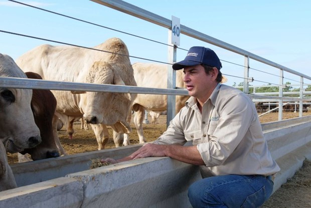 Australian company dispatches first shipment of live cattle to Vietnam hinh anh 1