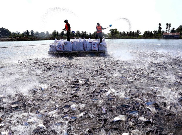 Tra fish industry may fully recover in Q3: directorate hinh anh 1