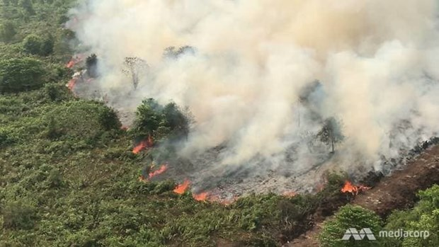 Forest fires complicate COVID-19 fight in Indonesia hinh anh 1