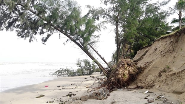 Underwater dyke set to save Cua Dai beach from erosion hinh anh 1