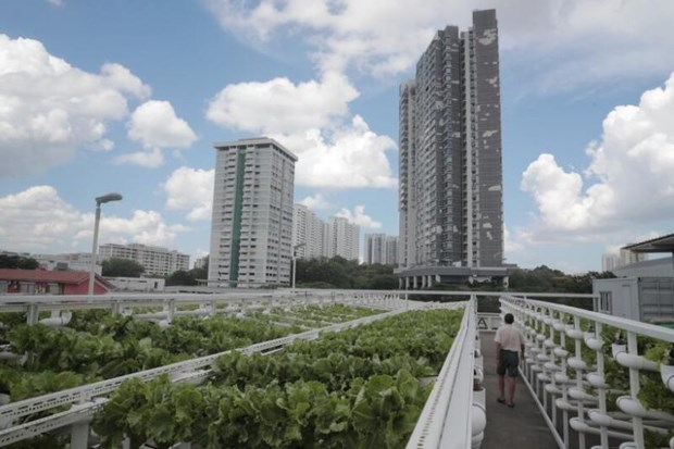 Singapore to build farms on carpark rooftops hinh anh 1
