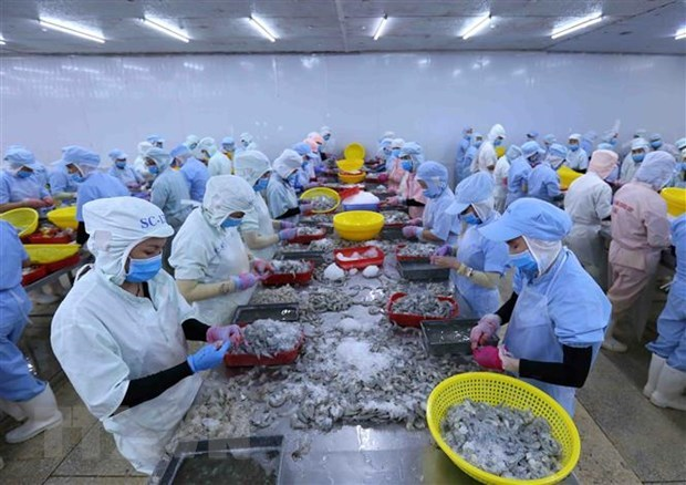 Vietnam's shrimp exports forecast to reach 3.8 billion USD in 2020 hinh anh 1