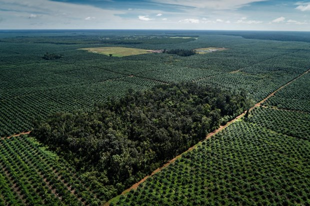 Thailand to use blockchain to facilitate palm oil trade hinh anh 1