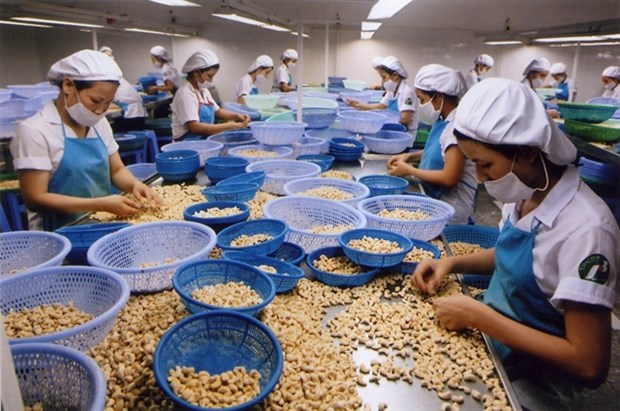 Vinacas recommends cashew enterprises to trade carefully hinh anh 1
