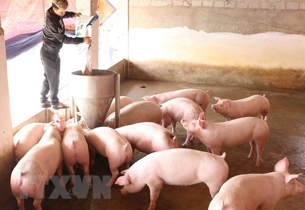 Vietnam imports pigs from Thailand hinh anh 1