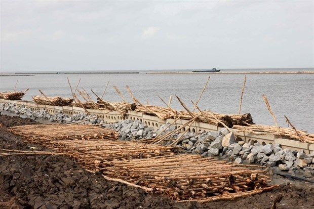 Ca Mau province works to prevent erosion, subsidence hinh anh 1