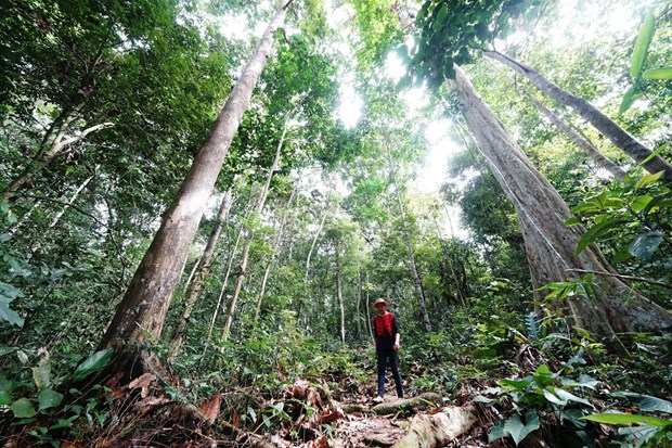 Indonesia to receive 56 million USD from Norway for reducing emissions hinh anh 1