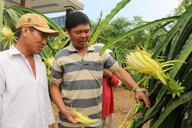 In climate change-hit Tien Giang, rice farmers switch to fruits, vegetables hinh anh 1