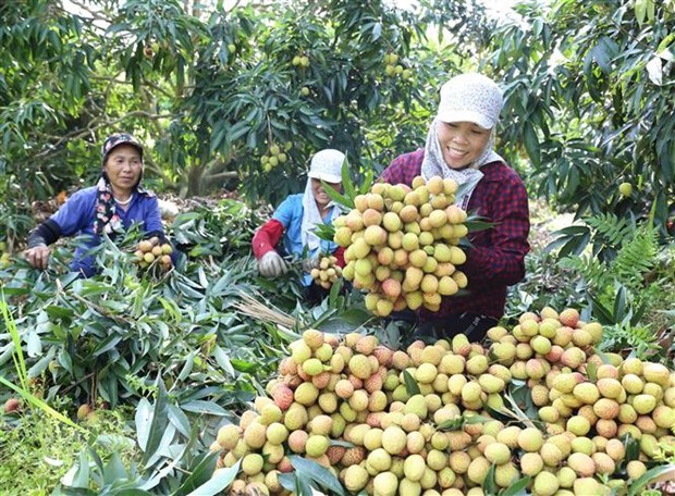 German newswire: Vietnam upbeat about economic recovery hinh anh 1