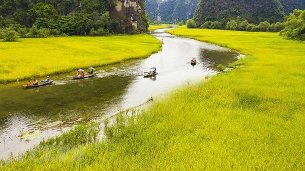 International tourists down nearly 50 percent hinh anh 1