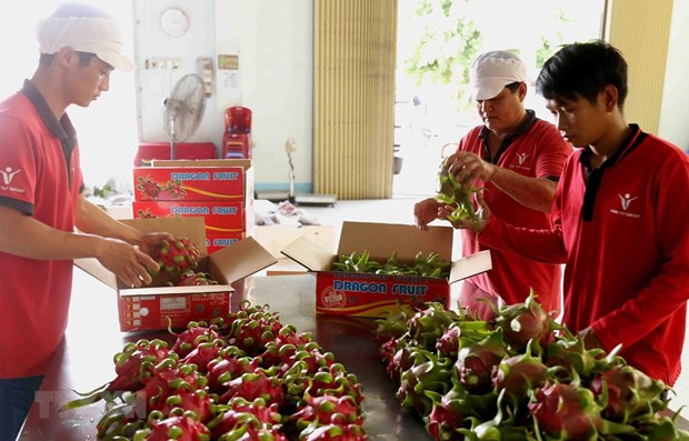 Vietnamese companies seek business opportunities in Singapore hinh anh 1