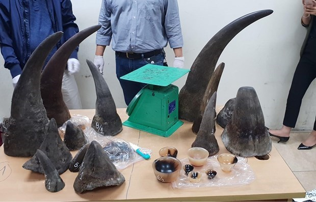 Man imprisoned for trafficking rhino horns hinh anh 1