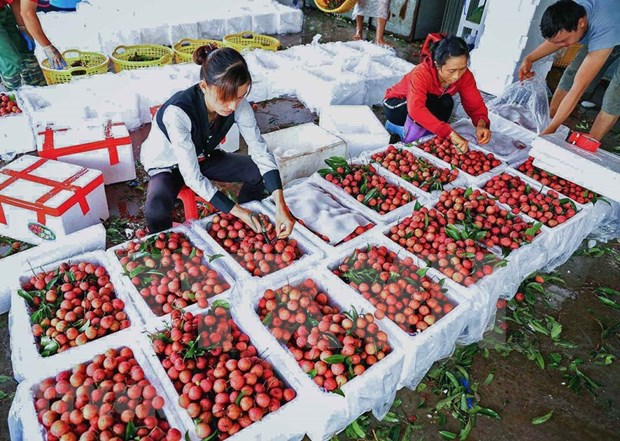 Bac Giang plans promotional events to boost lychee exports hinh anh 1