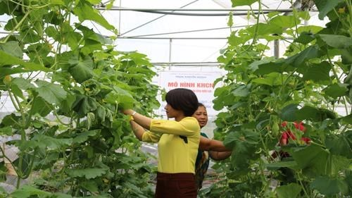 Bac Giang developing hi-tech agriculture to foster economic growth hinh anh 1