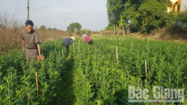 Bac Giang developing hi-tech agriculture to foster economic growth hinh anh 2