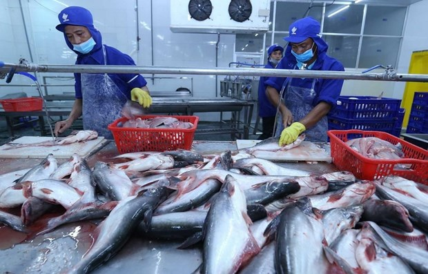 Tra fish exports plummet 39 pct. in first five months hinh anh 1
