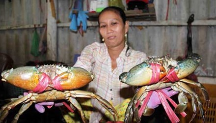 Four-month crab exports increase sharply to 44.5 million USD hinh anh 1