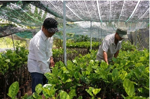 Country's largest seedling-growing district steps up production hinh anh 1