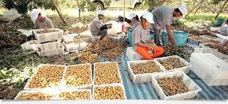 Thailand promotes marketing-led production strategy hinh anh 1