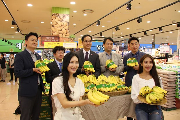 Vietnamese bananas hit shelves of Lotte Mart in RoK hinh anh 1