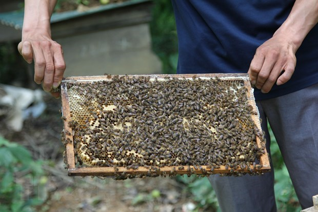 Beekeeping in Ca Mau recognised as national intangible heritage hinh anh 1