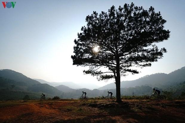Dalat Ultra Trail 2020 opens hinh anh 1