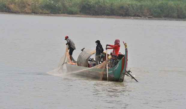 Cambodia: Falling water levels affecting fish population hinh anh 1