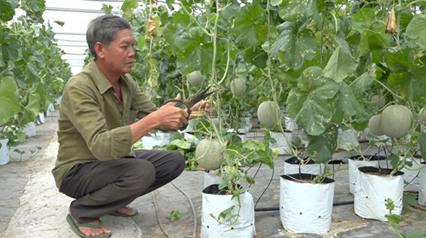 Dong Thap keen on switching to efficient irrigation hinh anh 1