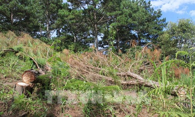 Central Highlands targets 49.2 percent in forest coverage in 2030 hinh anh 1