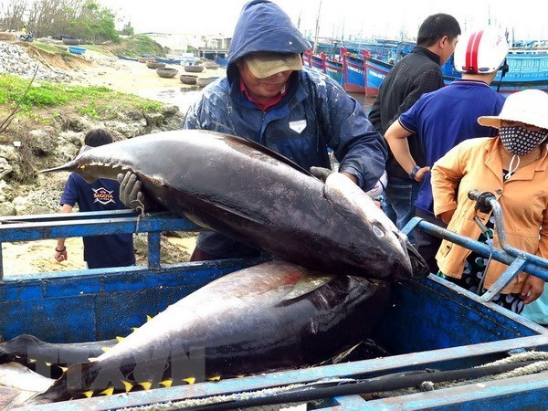EU to remove tariffs on Vietnamese tuna once trade deal takes effect hinh anh 1