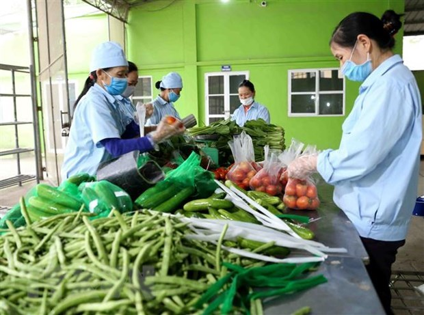 Cambodia yet to issue documents banning import of Vietnamese fruits, vegetables: ministry hinh anh 1
