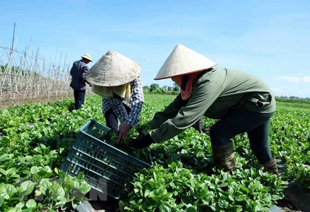 Mid-term rural, agricultural survey to begin on July 1 hinh anh 1