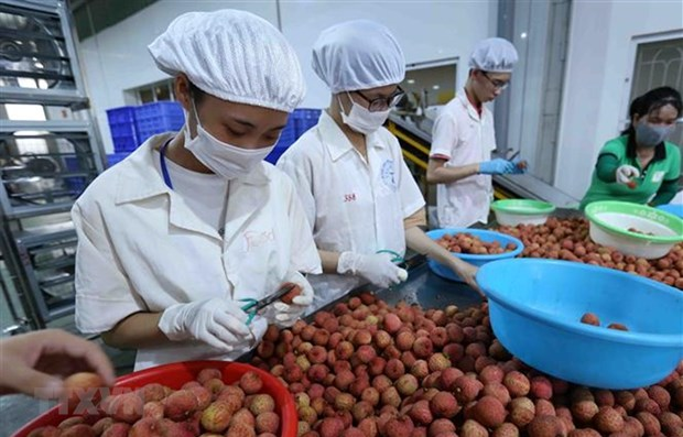 Vietnam, Japan discuss boosting trade of consumer goods hinh anh 1