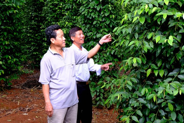 Organic Agriculture Development Project for 2020-2030 adopted hinh anh 1